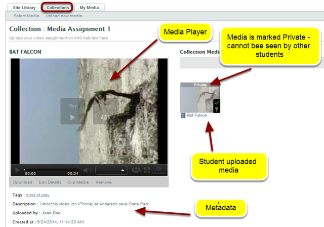 Example of student uploaded media in a Collection used as an assignment space: