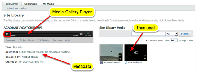 To play the audio, click the thumbnail of the audio on the right, then click Play in the Media Gallery Player.